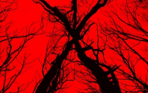 Blair Witch 2016 Widescreen
