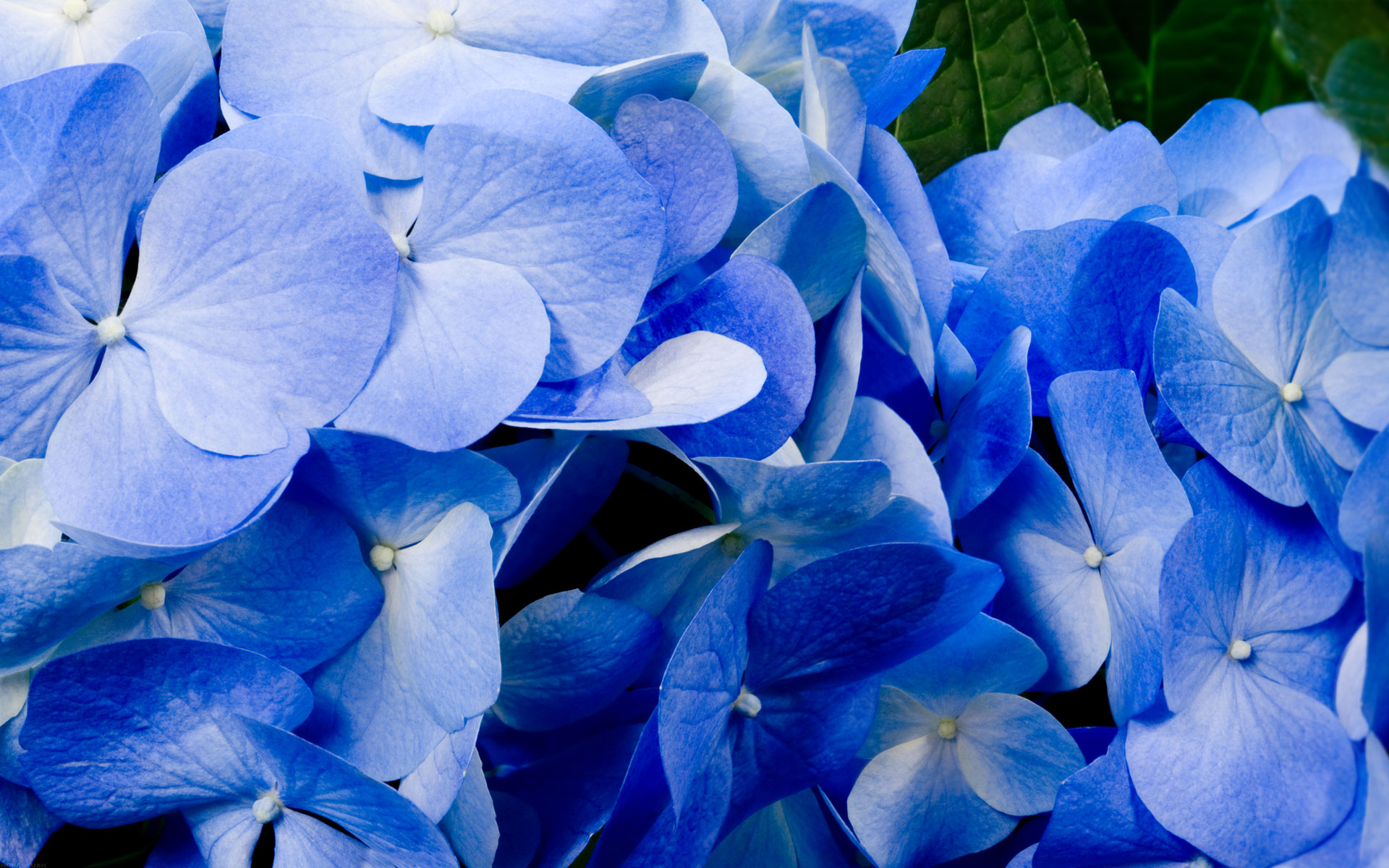 Blue flower hd wallpapers blue flower 4k izmirmasajfo Image collections