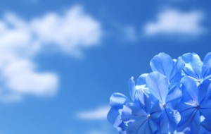Blue Flower Desktop