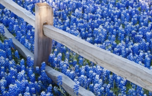 Blue Flower High Quality Wallpapers