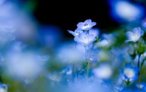 Blue Flower Images