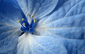 Blue Flower Wallpapers HD
