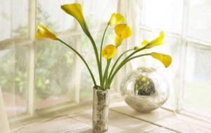 Calla Flower High Quality Wallpapers