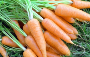 Carrots HD Desktop