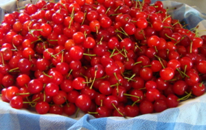 Cherries High Quality Wallpapers