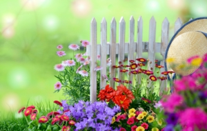 Garden Flower High Quality Wallpapers