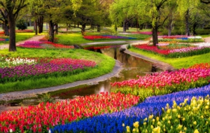 Garden Flower Wallpapers