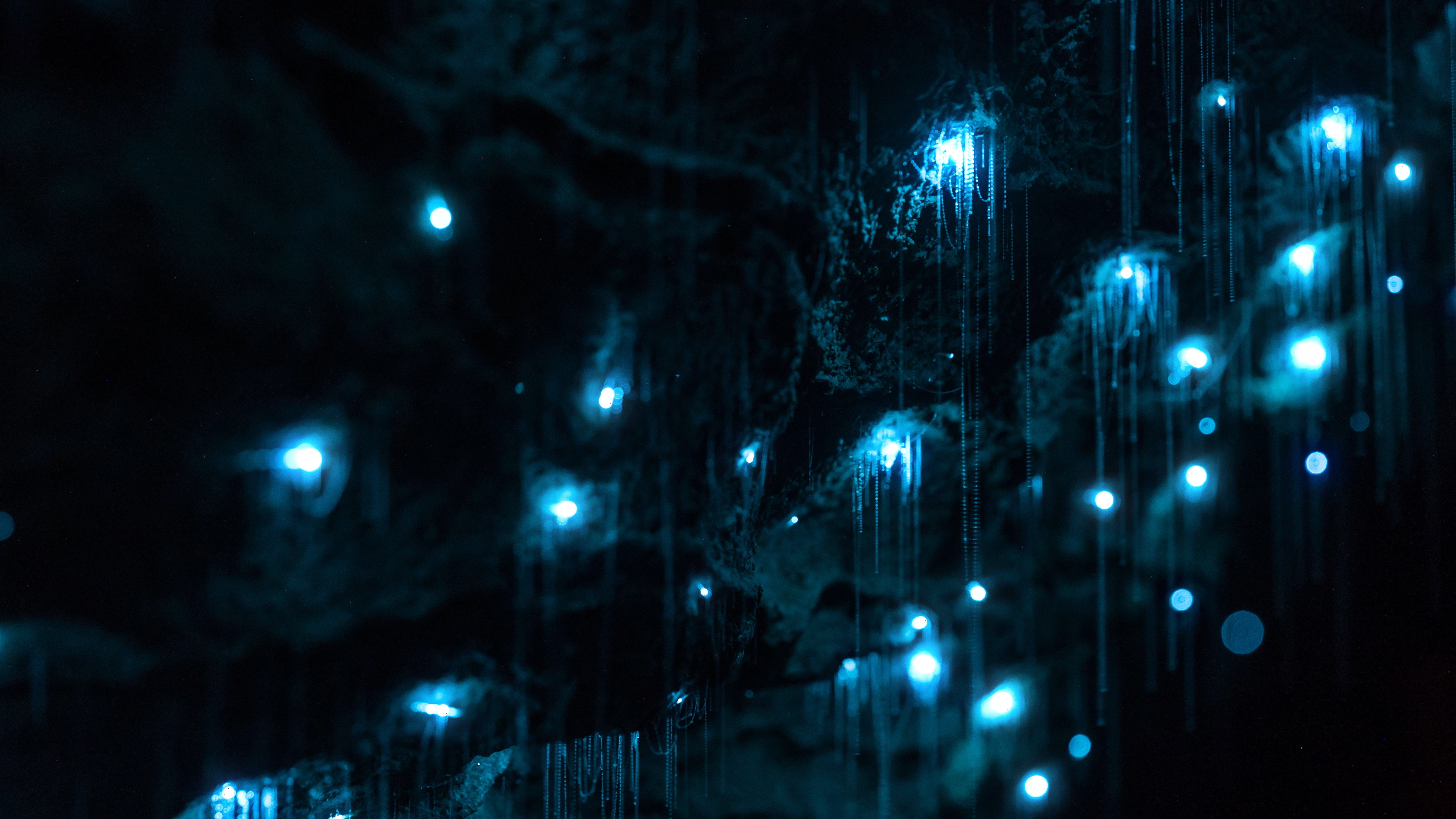 Glow worm cave HD Wallpapers