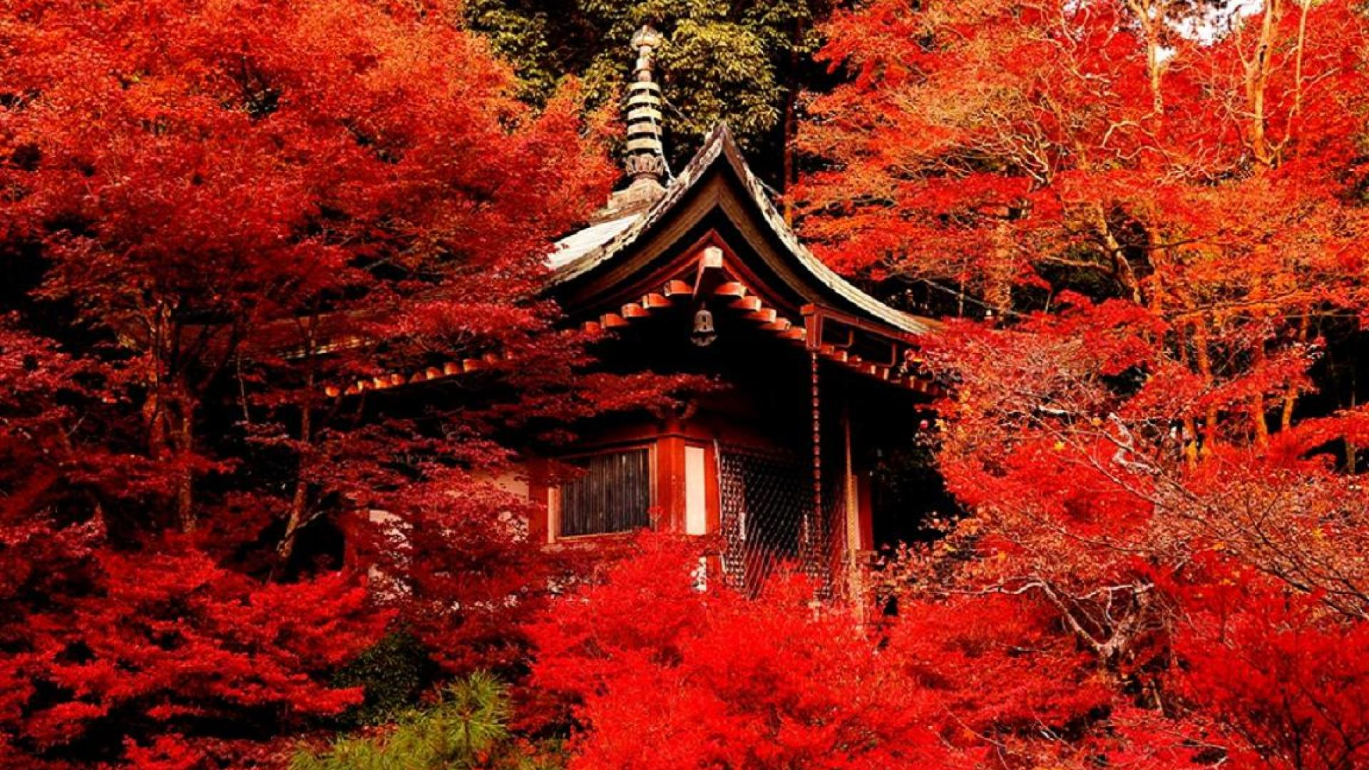 Pretty Trees Kyoto Hd Wallpapers