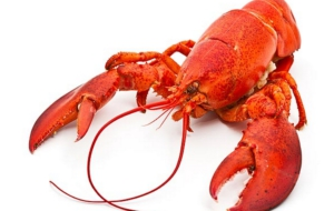 Lobster HD Wallpaper
