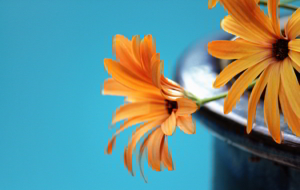 Orange Flower Background