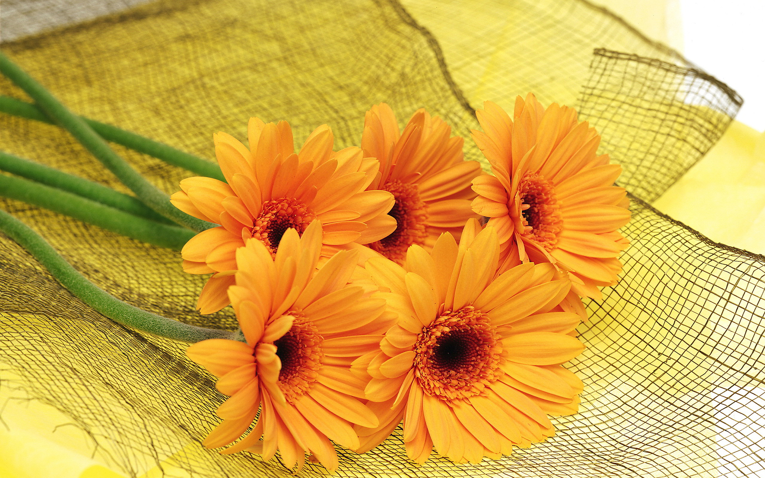 Orange Flower HD Wallpapers