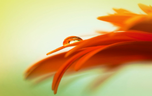Orange Flower Widescreen