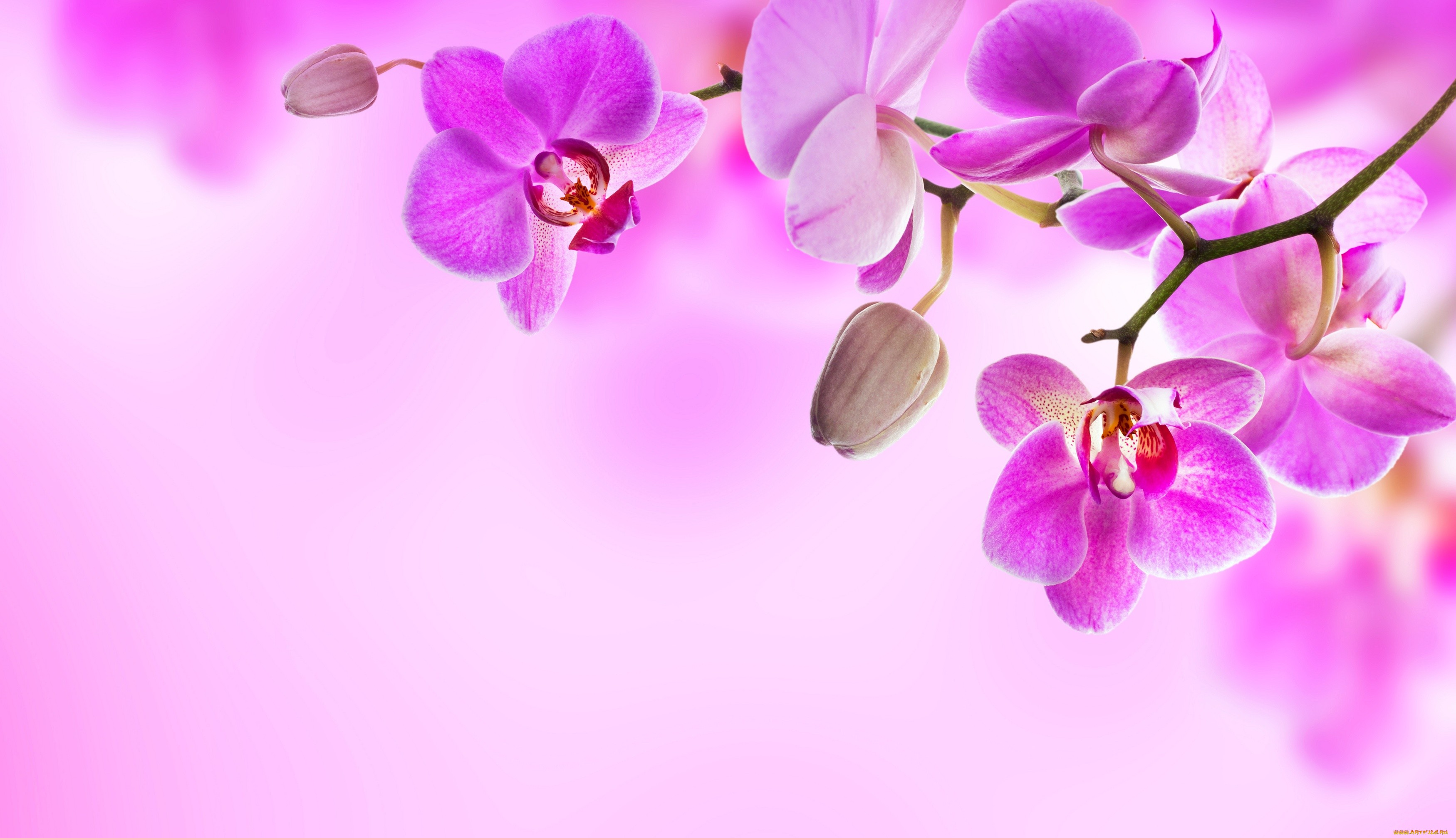 orchid wallpapers backgrounds images - photo #10
