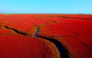 Panjin Red Beach HD Desktop