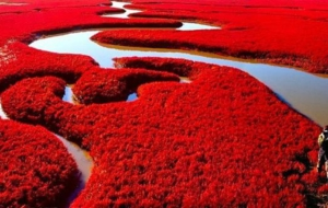 Panjin Red Beach HD Wallpaper