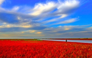 Panjin Red Beach High Definition