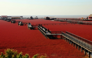 Panjin Red Beach Wallpapers