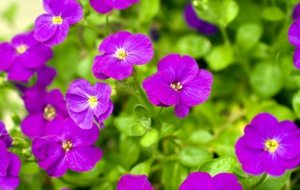 Purple Flower HD Background