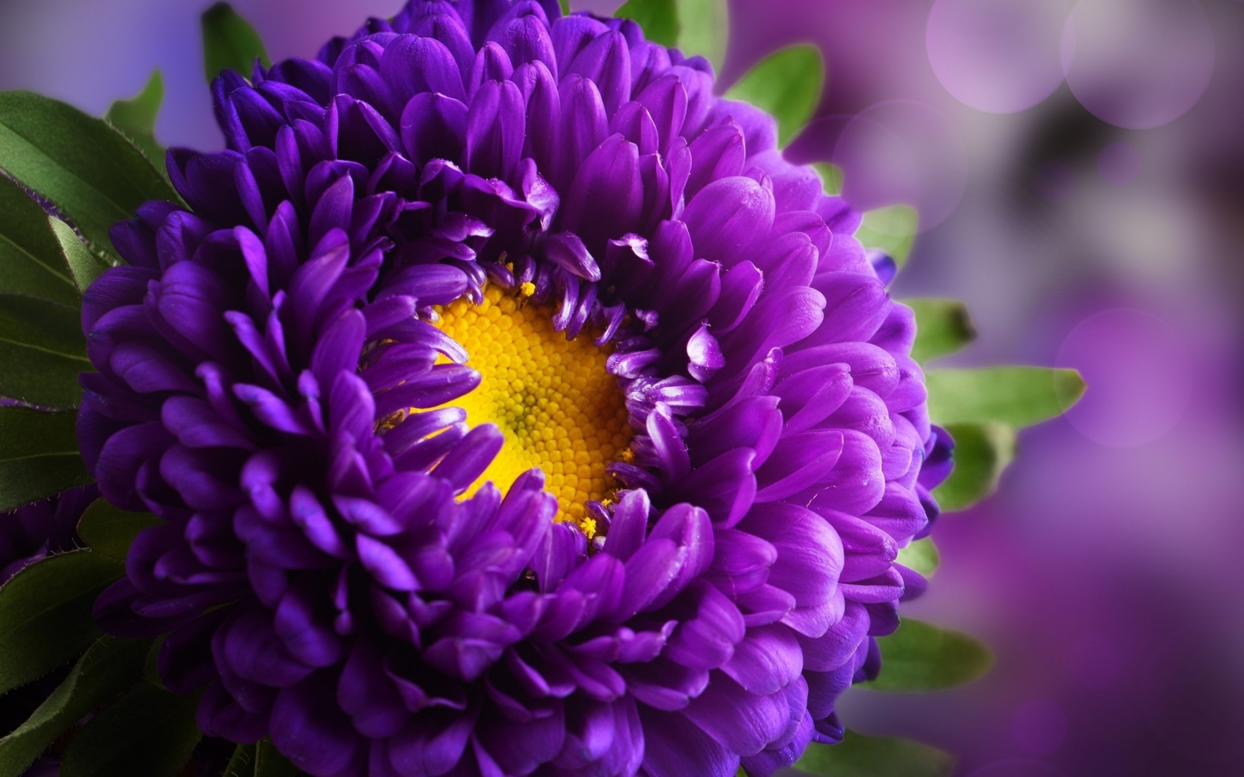 Purple Flower Hd Wallpapers