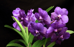Purple Flower High Quality Wallpapers