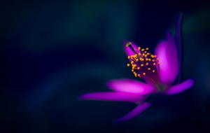 Purple Flower Images
