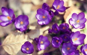 Purple Flower For Desktop