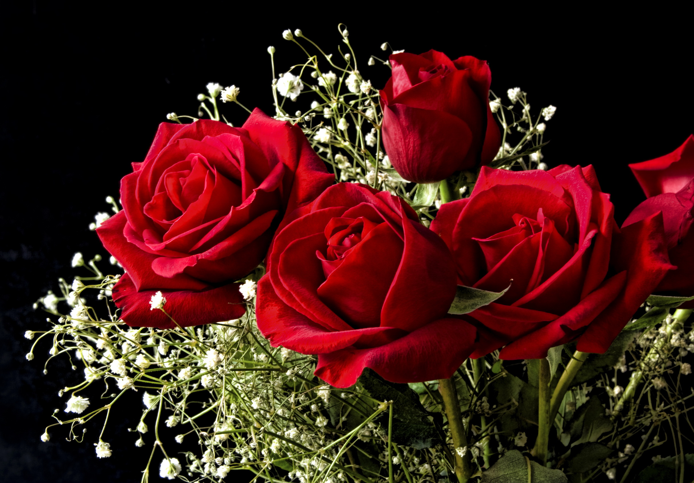 Red flower hd wallpapers - Valentine s day flower wallpaper ...