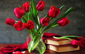 Red Tulips Photos