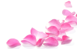 Rose Petals HD Background