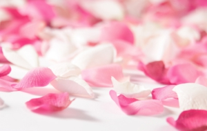 Rose Petals HD Wallpaper