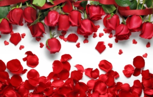 Rose Petals High Definition Wallpapers