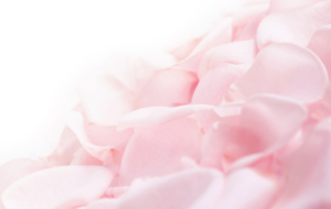 Rose Petals High Quality Wallpapers