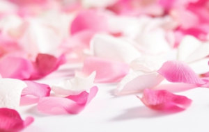 Rose Petals Wallpapers