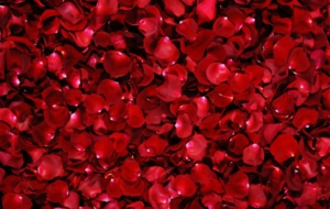 Rose Petals Wallpapers HD