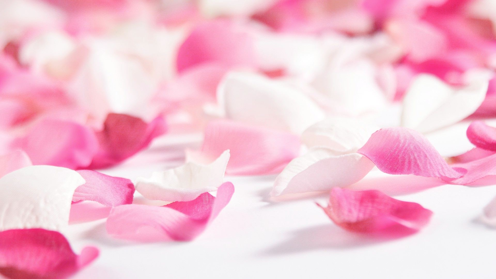 HD Rose Petals Wallpapers