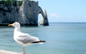 Sea Cliffs, Etretat Photos