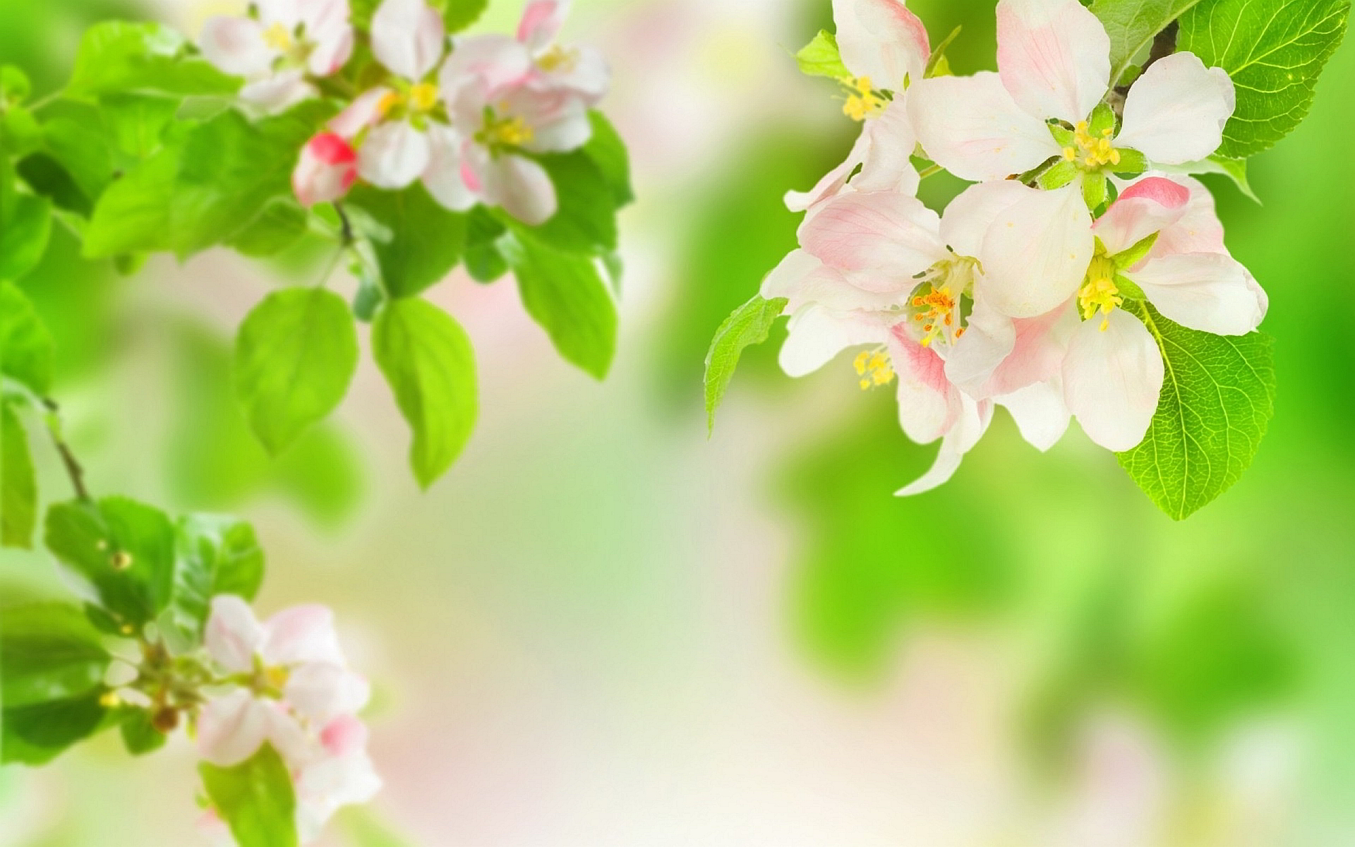 Spring Flower Background Images: Spring Flowers HD Wallpapers