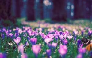 Spring Flowers HD Wallpaper