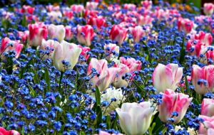 Spring Flowers High Definition Wallpapers