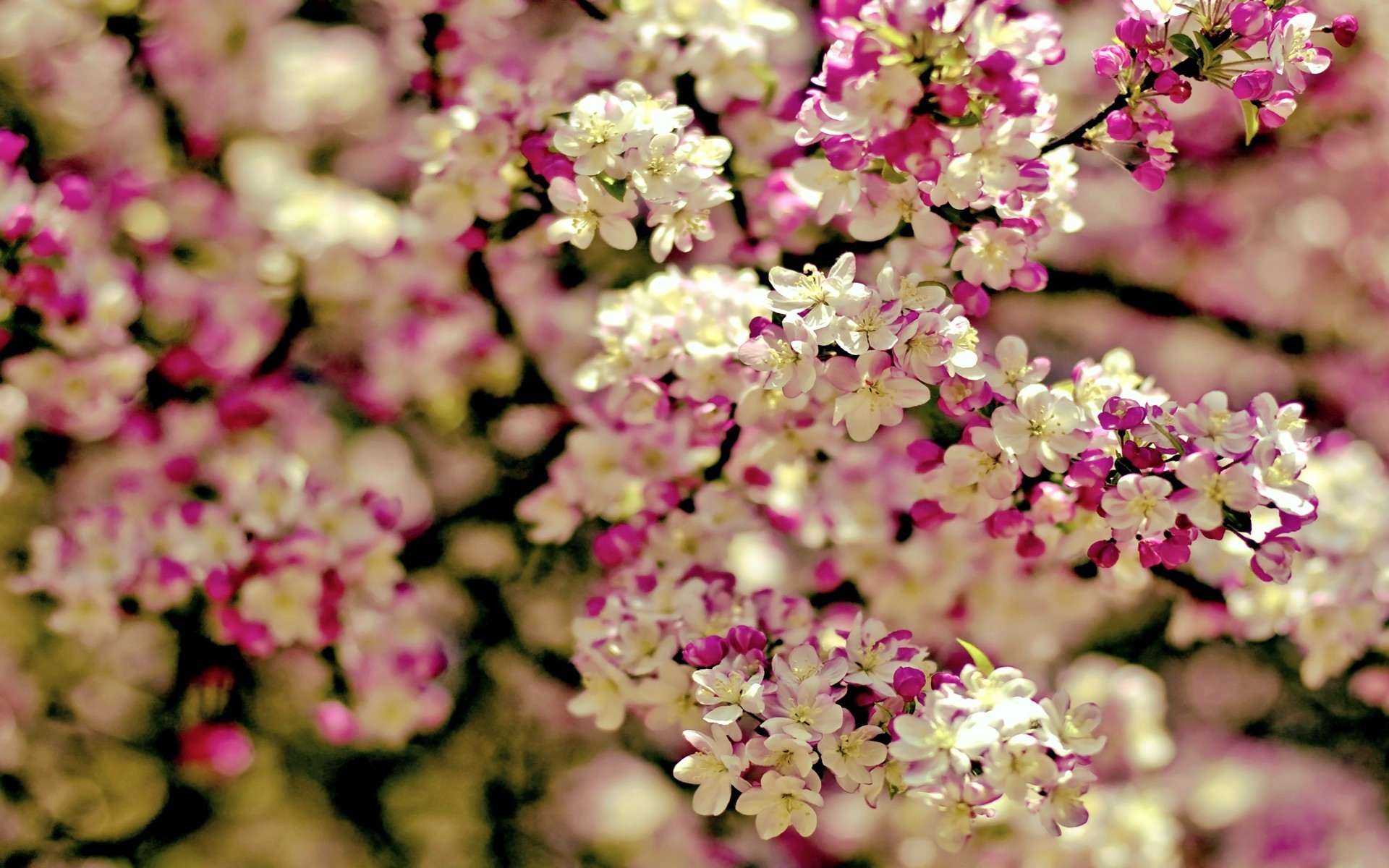 Spring flowers hd wallpapers spring flowers wallpaper mightylinksfo