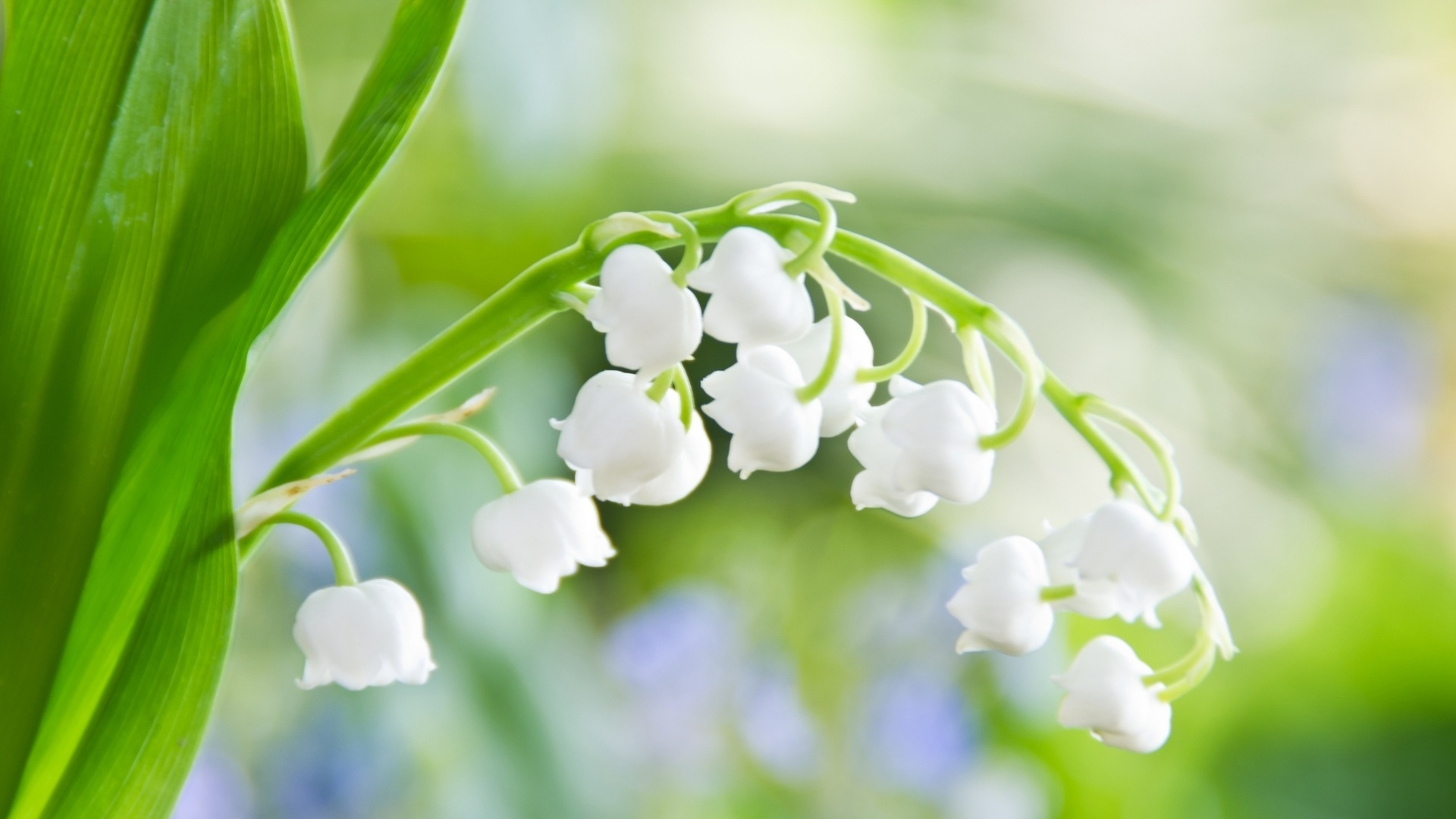 Spring flowers hd wallpapers wallpaper spring flowers desktop spring flowers for desktop mightylinksfo
