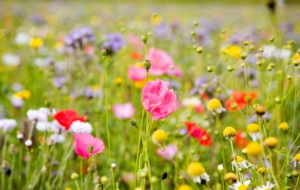 Summer Flower HD Desktop