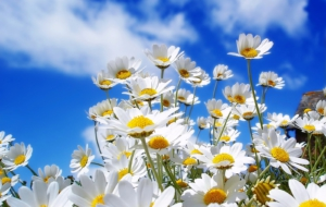 Summer Flower HD Wallpaper