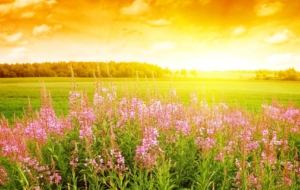 Summer Flower High Definition Wallpapers
