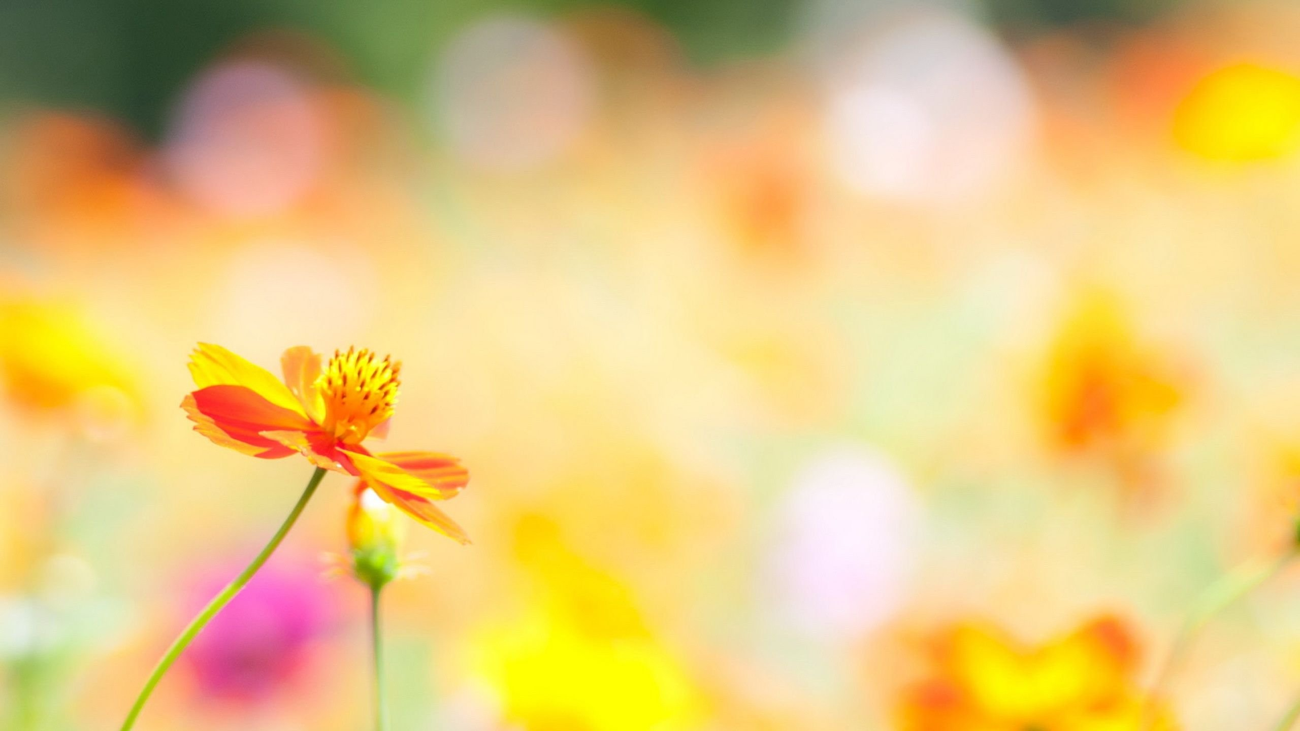 Flowers Images | Large HD Wallpaper Database | flowers | Pinterest ...