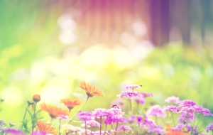 Summer Flower Wallpaper