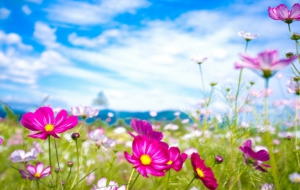 Summer Flower Wallpapers HD