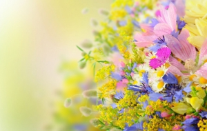 Summer Flower Widescreen