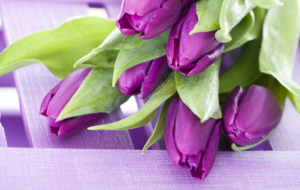 Violet Flowers High Quality Wallpapers